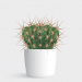 Plakat_Kaktus_Cactus_illustration_design