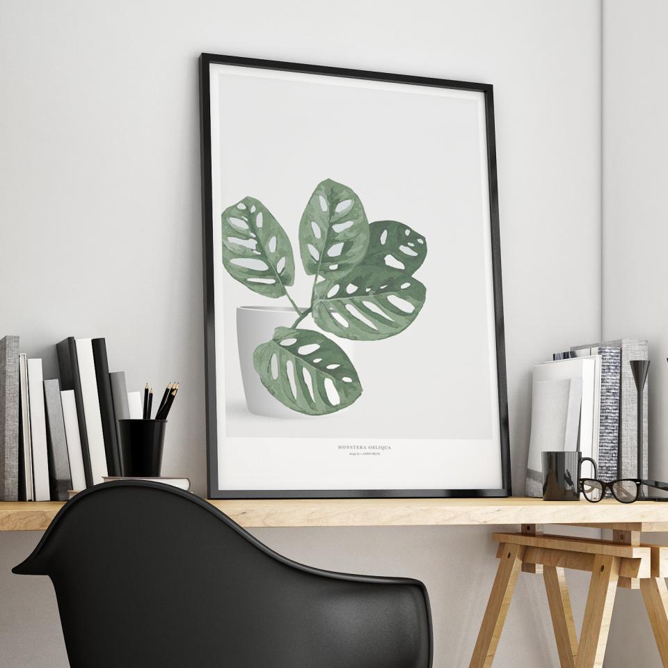 Filodendron_Monstera_Obliqua_Plaktermedplanter_Botanik_living_indretning_grøntrend_posterdesign_red-zone