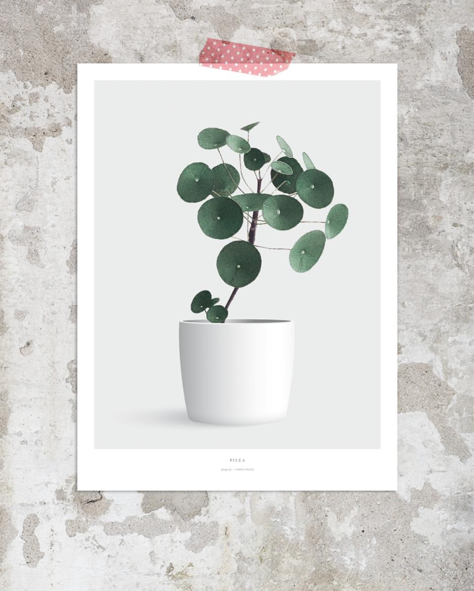 Pilea_plakat_design_Botanik_poster
